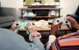 روانشناسی آواتارها در بازیهای ویدیویی